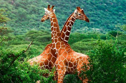 Африка, Кения, Танзания, сафари, туры в Африку